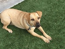 Stella is looking for a home in Alamogordo, New Mexico
