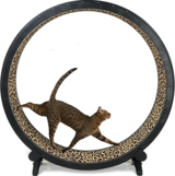 Cat Exercise Wheel in St. Charles, Illinois