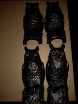 Owl decoys in Spring, Texas
