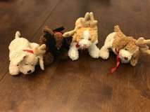 Tiny Reindeer Pets in Oswego, Illinois