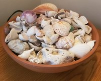 12 inch clay bowl with shells in Elgin, Illinois