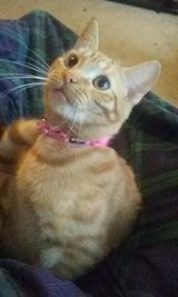 female cat to good home in Leesville, Louisiana