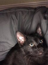 2 Free Kittens Need Gone By 5:30 Today in Clarksville, Tennessee