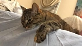 Rehoming our sweet kitty in Camp Lejeune, North Carolina