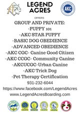 Indoor Winter Dog Training Classes in Dover, Tennessee