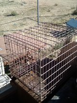 Pet Kennel in Yucca Valley, California
