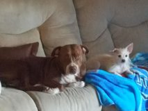 Red nose pit in Shreveport, Louisiana