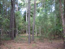 REDUCED! Swansboro Lot for Double-Wide, Modular or Stick-built Home! in Camp Lejeune, North Carolina