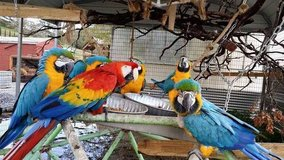 Beautiful macaw parrots are available for adoption in Stuttgart, GE