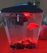 5 gallon fish tank in Lawton, Oklahoma