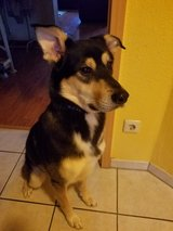 Chico needs a home in Ramstein, Germany