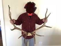Elk antlers with skull cap in Bolingbrook, Illinois