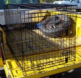 XL DOG Strong Metal KENNEL / CRATE Brand FOUR PAWS in Ruidoso, New Mexico