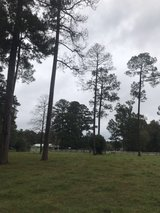 Pine trees in Leesville, Louisiana