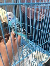 looking for a parakeet and a  parrot in Fort Polk, Louisiana