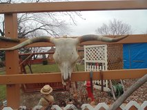 SKELETAL TEXAS STEER SKULL in Orland Park, Illinois