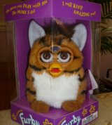 Furby - The Tiger in Vacaville, California