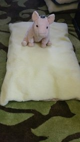 Doggie beds in Yucca Valley, California