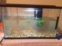 Fish tank complete in Alamogordo, New Mexico