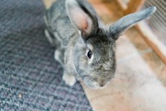 Bunny Rabbit in Fort Leonard Wood, Missouri
