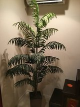 Faux Plant in Okinawa, Japan