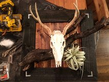 looking for taxidermy work in Fort Campbell, Kentucky