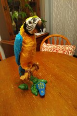 Mc Caw furreal friends parrot in Shorewood, Illinois