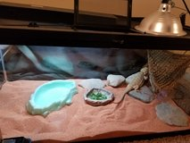 bearded dragon in Fort Campbell, Kentucky