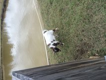 Goats in Fort Polk, Louisiana