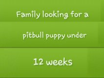 family wanting a pitbull pup in Fort Leonard Wood, Missouri