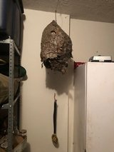 Hornets Nest in Fort Leonard Wood, Missouri