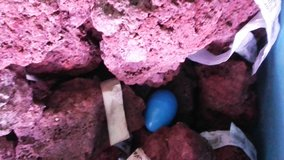Red lava rocks for aquariums in Fort Leonard Wood, Missouri