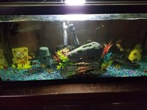30 gallon full set up with over 30 fish in Alamogordo, New Mexico