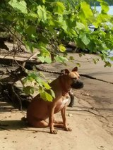 Dog lost in Nashville, Tennessee