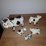 Cow and more Cows in Ramstein, Germany