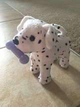 American Girl Dalmatian in Vacaville, California