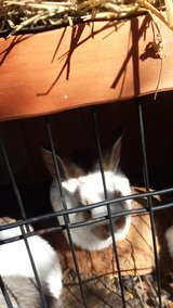 rabbits in Lawton, Oklahoma