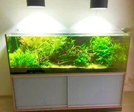 300l fish tank incl. everything, electronics, plants, few fish, side board in Stuttgart, GE