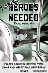 Urgent Foster Heros for Dogs/Puppies NEEDED NOW!! in Okinawa, Japan