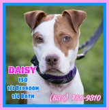 *** HI I'M DAISY....My 2nd BIRTHDAY is on January 31st and I REALLY NEED SOMEONE TO SPEND IT WIT... in Houston, Texas