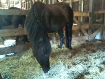 Very sweet mare in Camp Lejeune, North Carolina