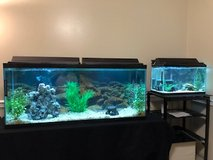 Two Complete Fish Aquariums: 55gal & 25gal w/two Blue Electric Crayfish included in Quantico, Virginia