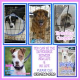 ????????????  PLEASE COPY & SHARE  ????????????  https://www.houstonpetsalive.org in Pearland, Texas