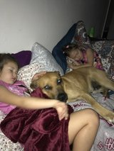 Rehoming 1 year old Black Cur dog in Kingwood, Texas