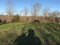 Stall and Pasture Rent in Fort Leonard Wood, Missouri