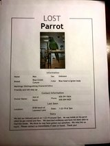 MISSING:  Blue Crown Conure in Wheaton, Illinois