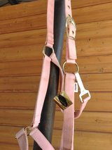 Brand new halters in Alamogordo, New Mexico