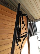 English bridle,  noseband, reins in Alamogordo, New Mexico