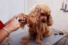 Dog Grooming Appointments in Fort Campbell, Kentucky