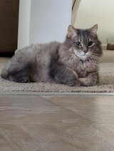 LOST SENIOR CAT in Joliet, Illinois